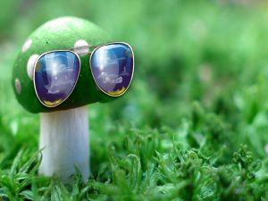 Mushroom with sunglasses