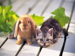 A rabbit and a kitten