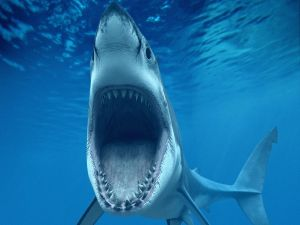 The shark's mouth