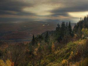 Shadowy landscape