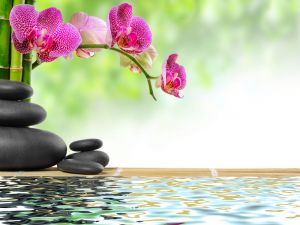 Orchid, bamboo, stones and water