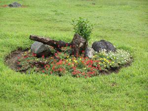 Floral composition in a garden