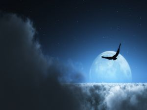 Bird above the clouds with the moon in background