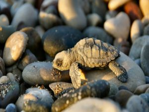 Little turtle over stones