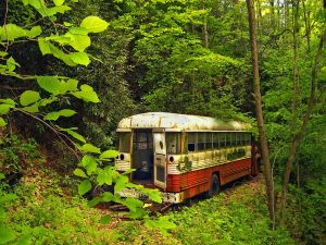 Abandoned bus amidst the forest