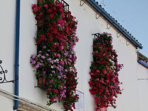 Flowers falling from windows