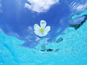 White flower in blue waters