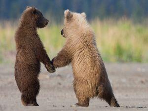 Little bears holding hands