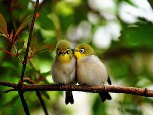 Couple of birdies