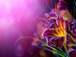 Flower under a purple light