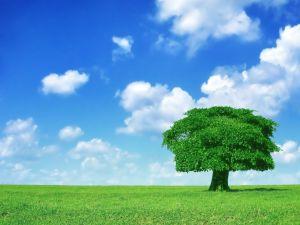 Lone tree in a green meadow