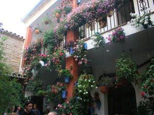 Pots of flowers on the wall (Festival of the Patios)