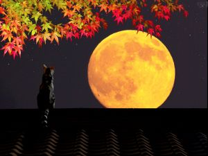 Cat on a roof looking at the full moon