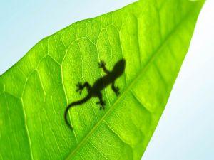 Shadow of salamander on a leaf