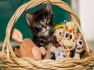 Kitten in a basket with his toys