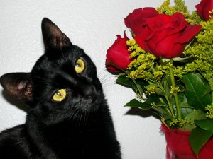 Cat smelling some roses