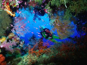 The wealth of the seabed