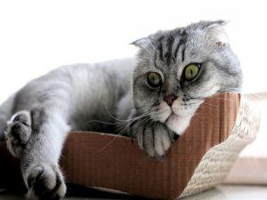 A kitten resting