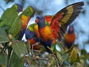 Multicolored parrots on a branch