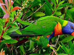 Parrot with vividly colored plumage