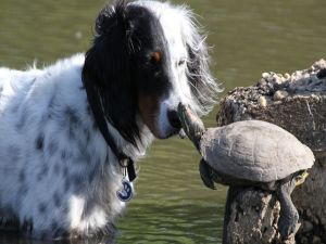 Dog and turtle friends