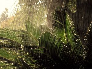 Rain over a green plants