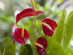 Exotic red flowers