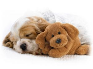 Puppy with her ​​teddy