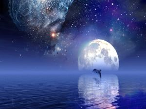 Dolphin under a starry sky