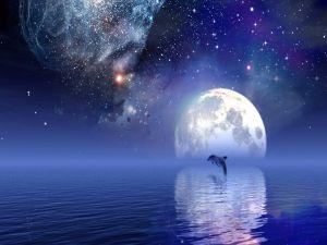 Dolphin under a starry sky