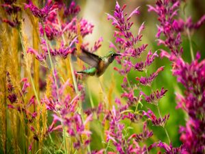 Hummingbird among flowers