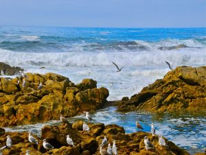 Gulls among the rocks