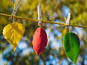 Colorful leaves hung with tweezers
