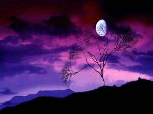 Lone tree under the moonlight