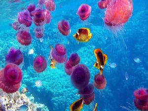 Seabed full of jellyfishes and fishes