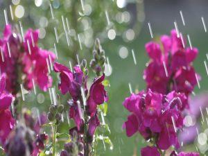 Flowers under the rain