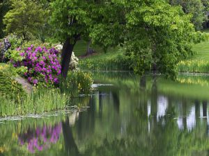 River between trees and flowers