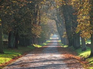 Avenue of the Buckeyes in a park in the city of Putbus (Germany)