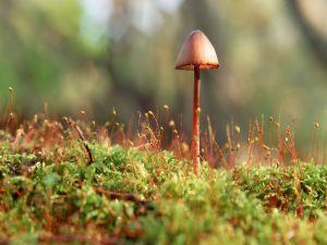 Long mushroom