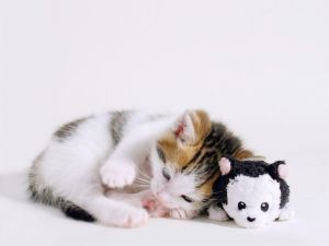 Kitty with her toy