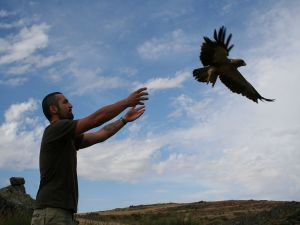 Liberation of a Booted Eagle