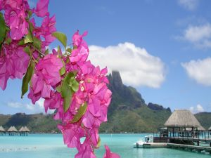 Flowers on a paradisiacal beach
