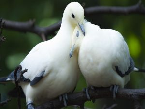 Birdies united by love