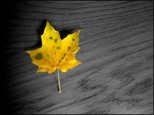 Only a leaf