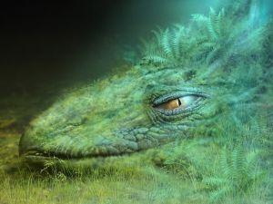 Dragon dozing