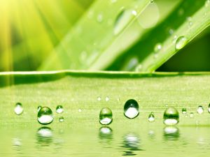 Pearls of water on a green leaf