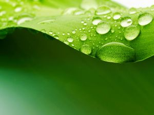 Green leaf with water