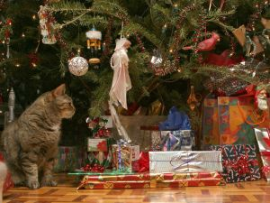 The Christmas of a cat
