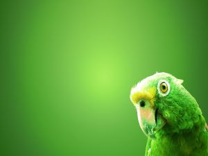 The head of a green parrot