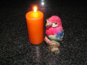 Candle and little parrot